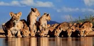 Greg du Toit - African Wildlife Photographer