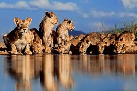 Greg du Toit - Wildlife